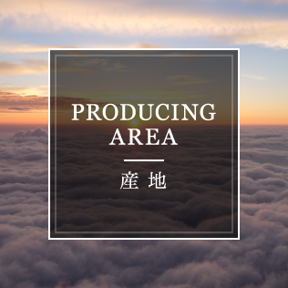 PRODUCING AREA 産地